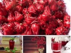 Những tác dụng tuyệt vời của trà Hibiscus đối với sức khỏe